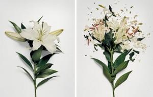 jon-shireman-borken-flowers-1-600x381