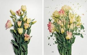 jon-shireman-borken-flowers-2-600x381