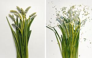jon-shireman-borken-flowers-3-600x381