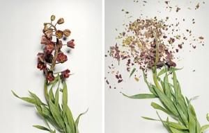 jon-shireman-borken-flowers-4-600x385