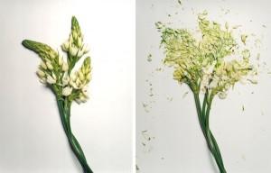 jon-shireman-borken-flowers-5-600x385